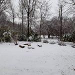 Neve all'asilo 3