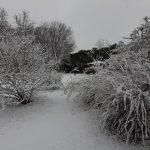 Neve all'asilo 5